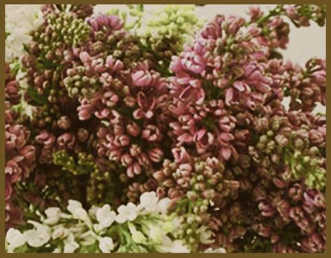 Le Lilas/Lilac